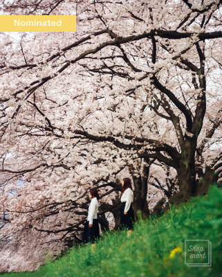 sakura2016_nominated005_w