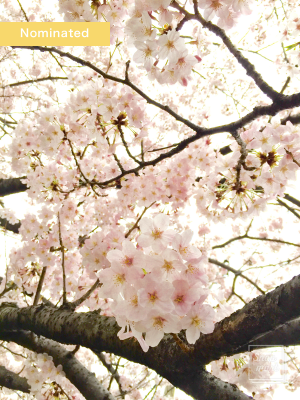 sakura2016_nominated008_w