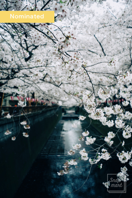 sakura2016_nominated009_w